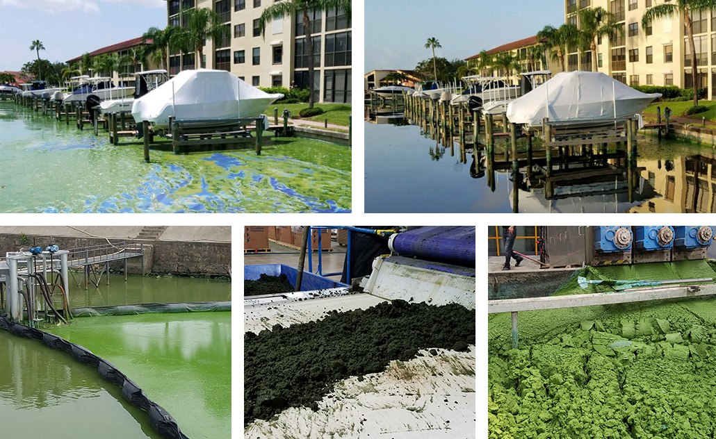 Harmful algae blooms and production process