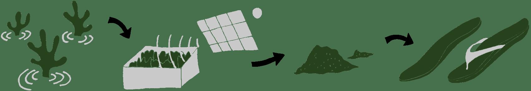 Bloom Foam Algae Sustainable Material Process